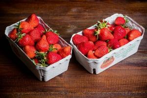 Zwei Schalen mit je 500 g großen Erdbeeren vom Spargel- und Erdbeerhof Hirsch in Trebur 500 g